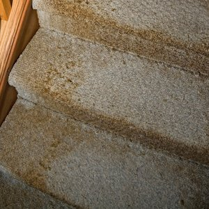 According To The Epa Mildew Refers A Certain Kind Of Fungus Or Mold Growth Usually With Flat Habit