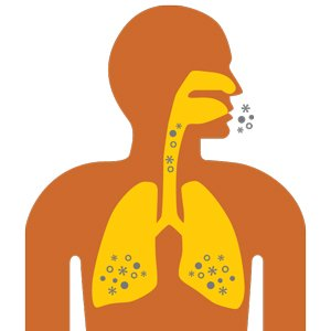 Asthma Triggers are Breathed into Lungs